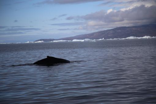 見到鯨魚啦!