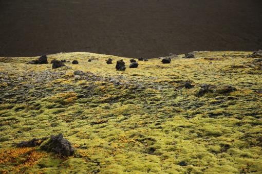 在火山土壤都能生長的苔蘚